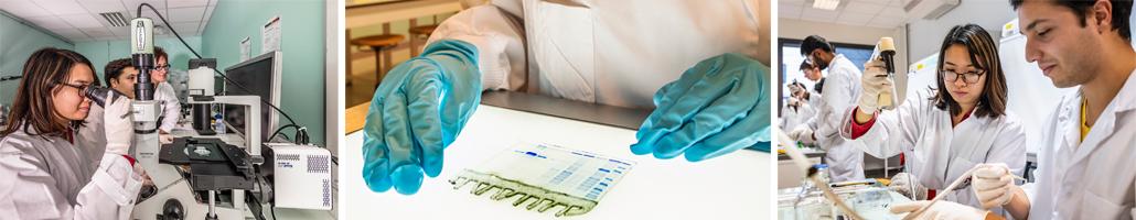 Grenoble INP - Phelma > TP Molecular-biology & Biochemistry